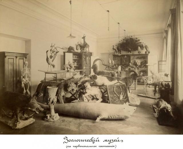 1902 год. Зоологический музей в КПИ