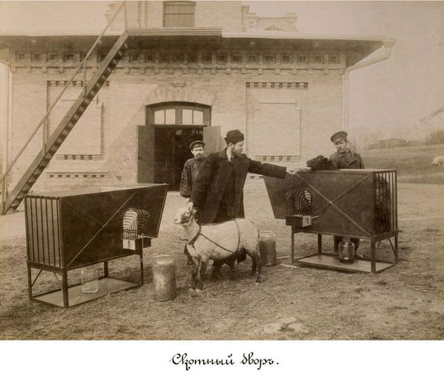 1902 год. Скотный двор КПИ
