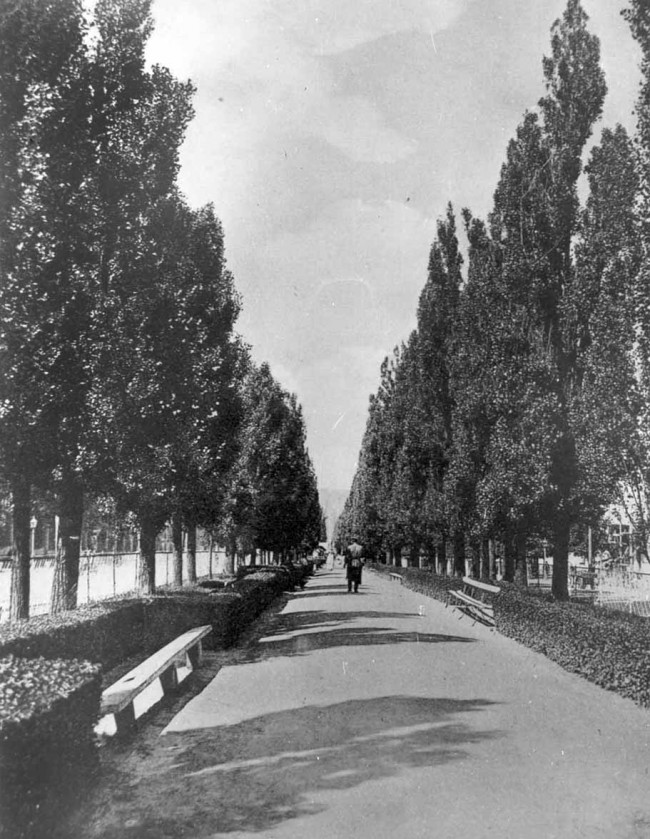 Аллея на бульваре Шевченко в конце 19 века