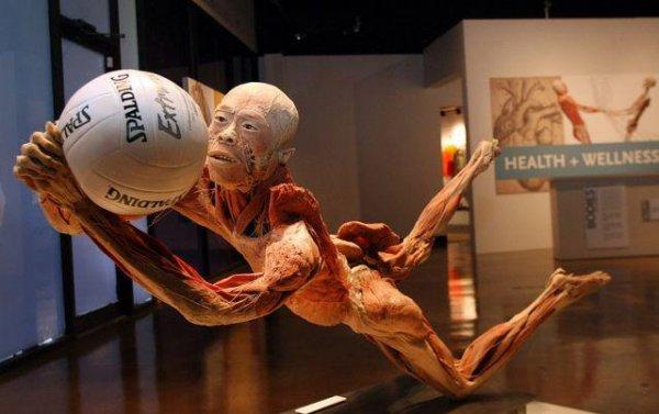 тайны тела на выставке в НСК Олимпийский