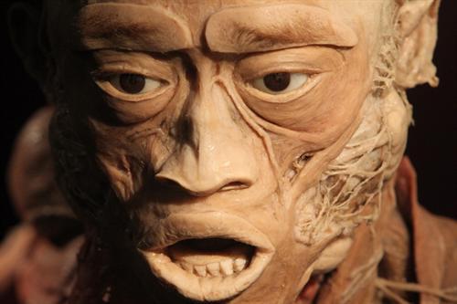 Мышцы лица на одном из экспонатов выставки на НСК Олимпийский