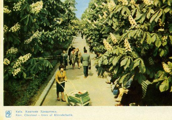 Киев на открытках. 1964 год. Крещатик, каштаны