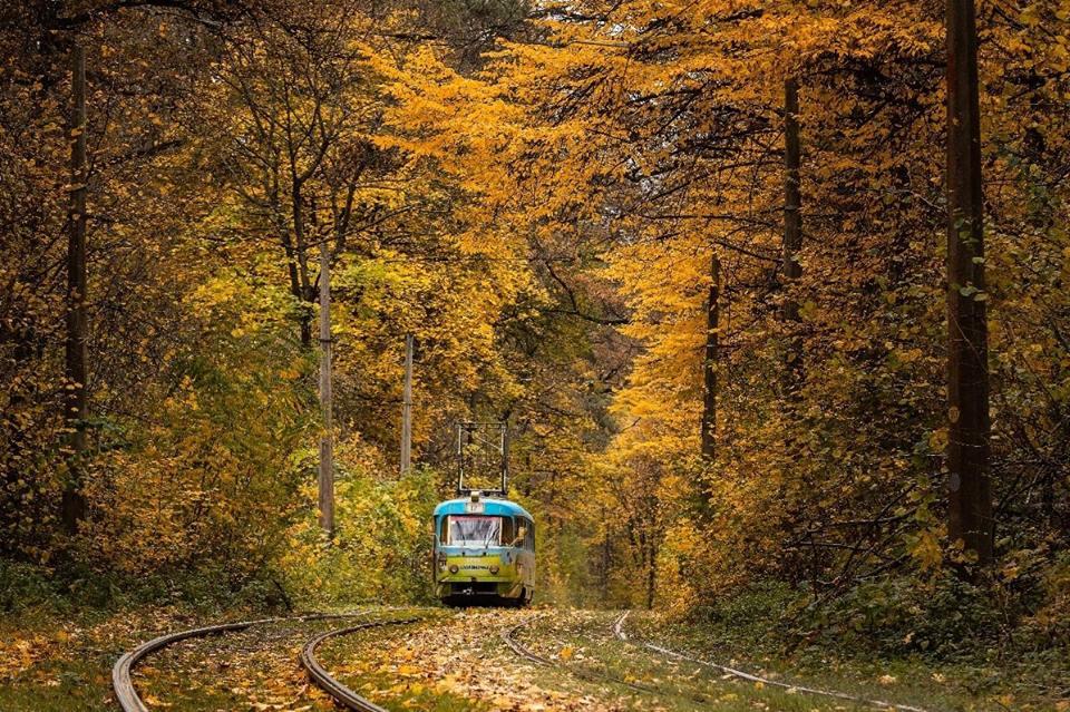 Трамвай в Пуще-Водице, золотая осень
