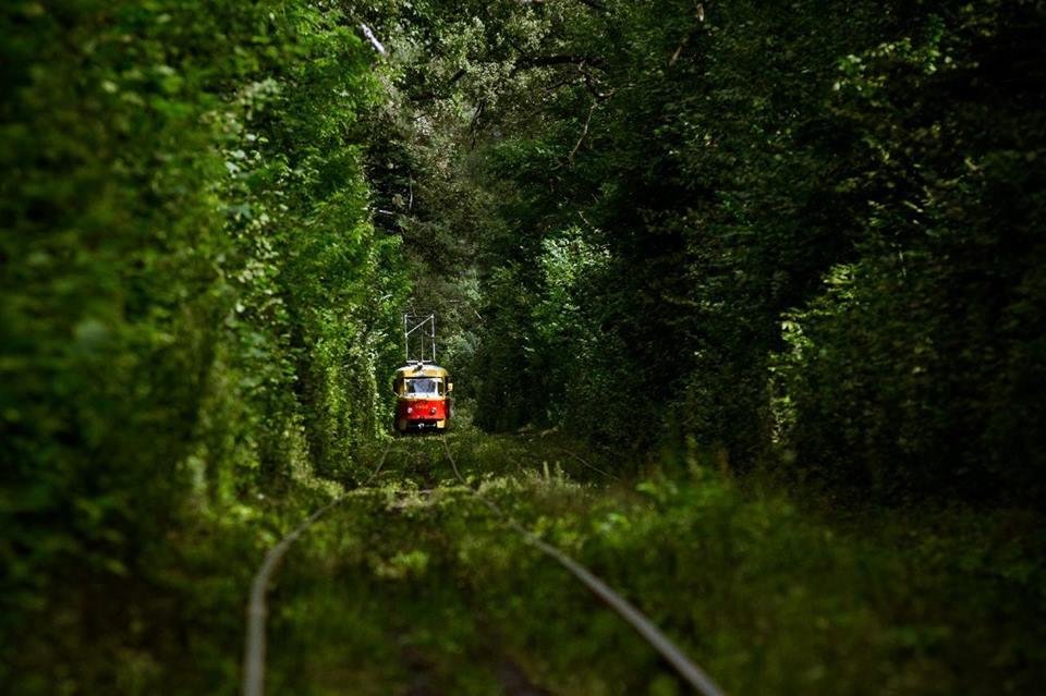 Пуща-Водица: трамвай из лета в осень