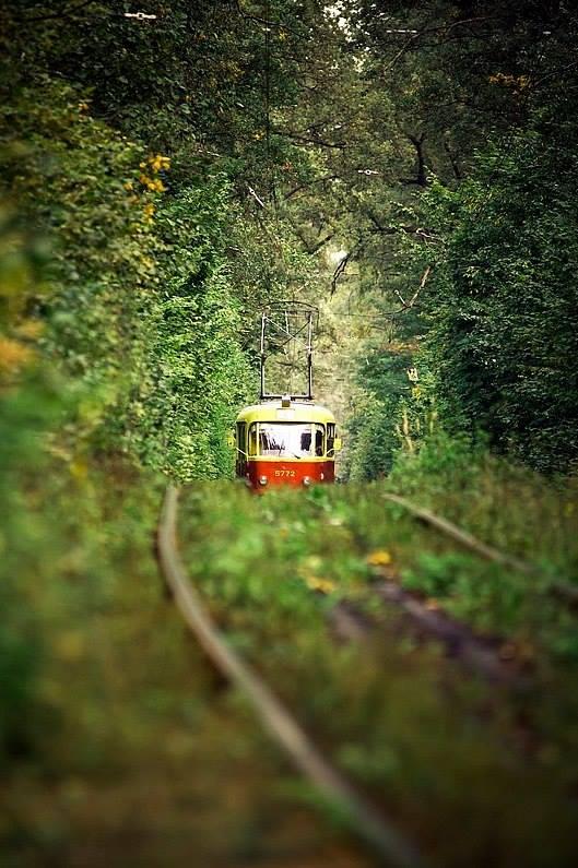 Трамвай в Пуще-Водице, позднее лето